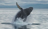 See the Whales of Pt. Adolphus!