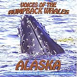 Listen to the Humpback Whales sing!